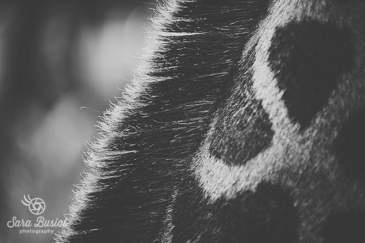 giraffe_sara-busiol019