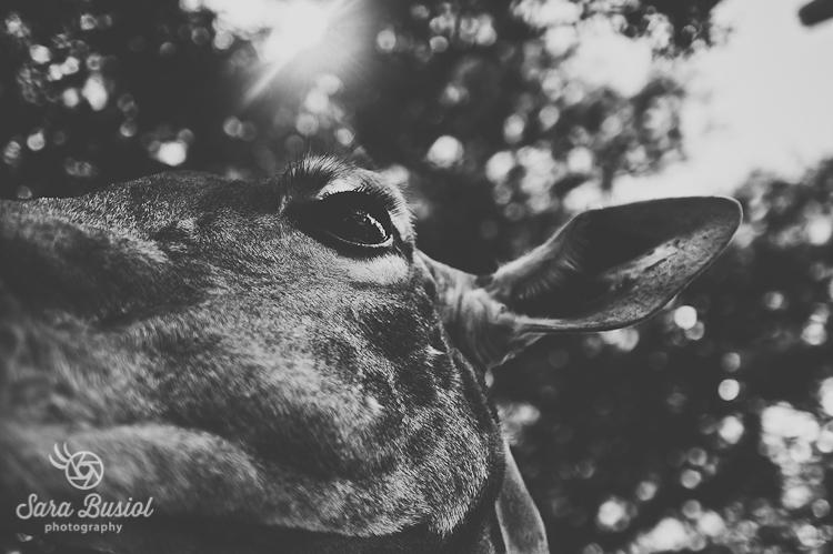 giraffe_sara-busiol025