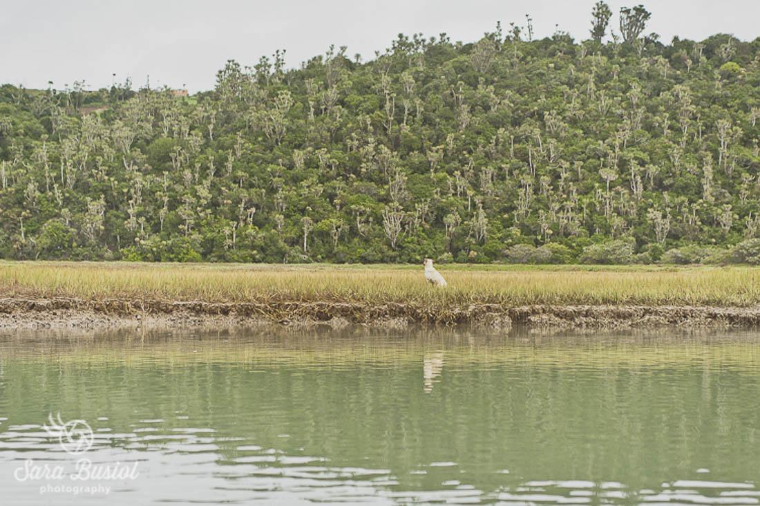 port-alfred_sara-busiol096
